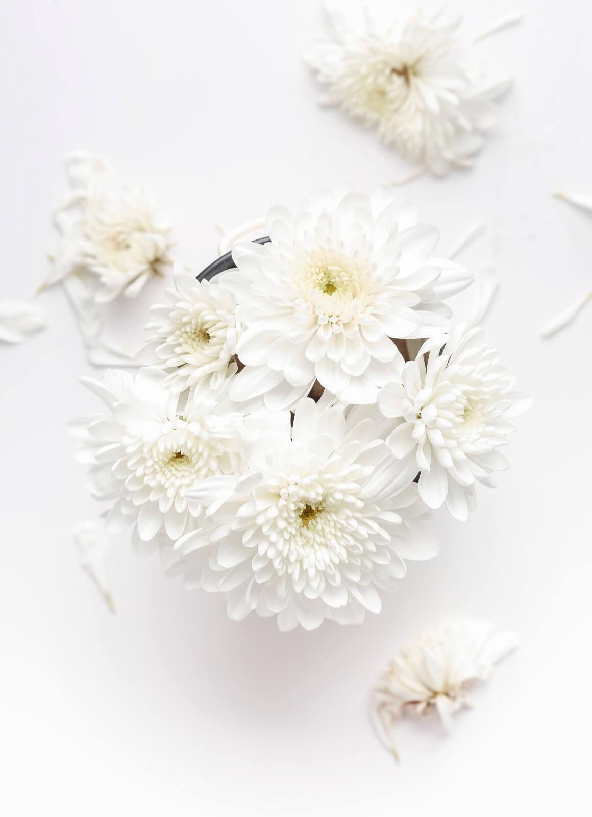 Białe kwiaty w doniczce