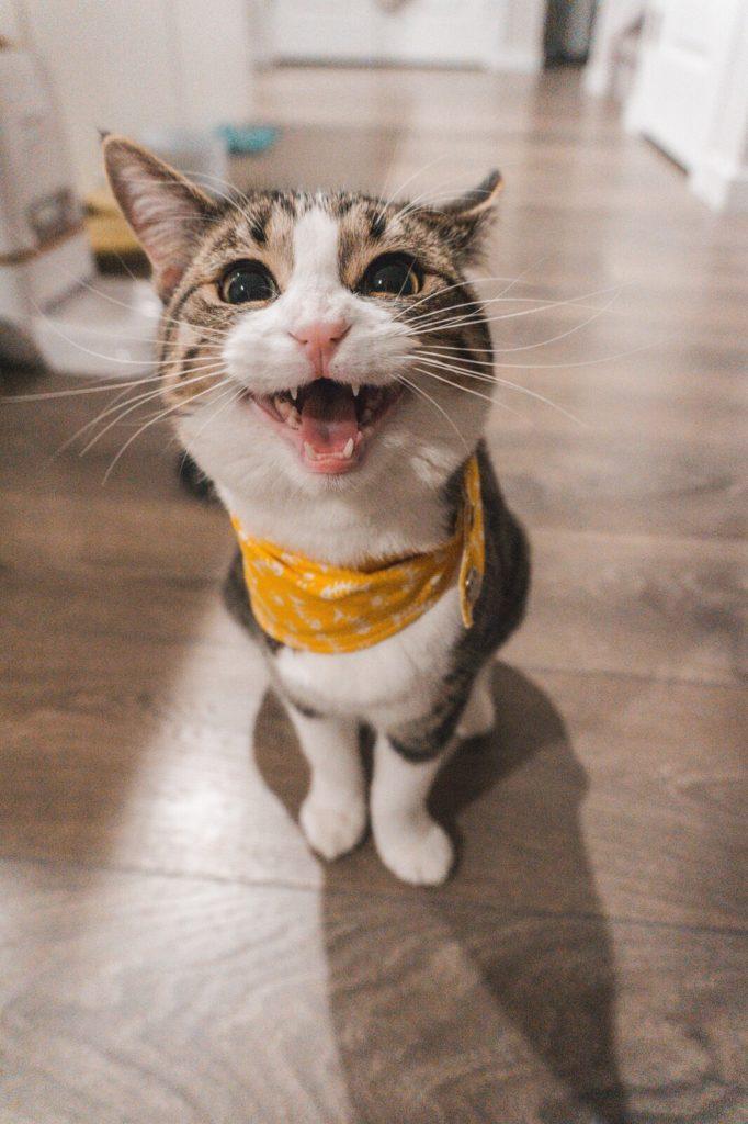 Drapak dla kota to niezastąpiony element wyposażenia mieszkania