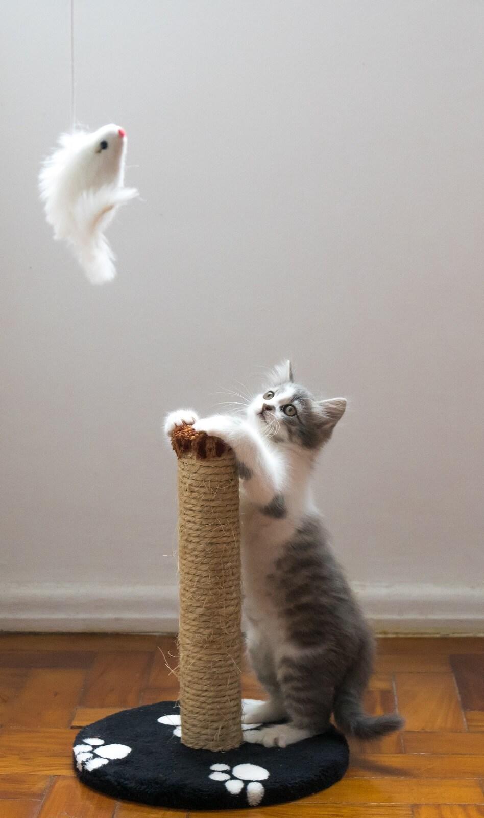 Zabawka dla kota na wędce