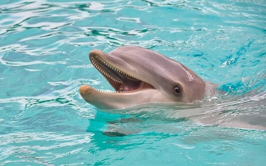 Delfin w basenie