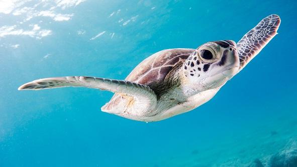 Zwierzę żółw