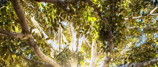 Co to za drzewo? [Quiz]