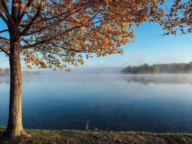 Jezioro i drzewo