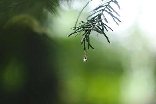 Kropla wody na drzewie