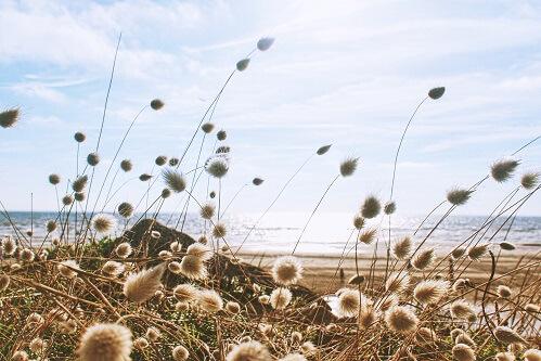Morze i sucha trawa na plaży